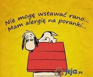 Mam alergię na poranki