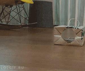 Kolejny zwyczajny dzień kota