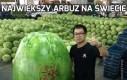 Największy arbuz na świecie