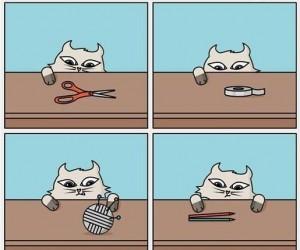 Zastanawiałeś się kiedyś, po co kotu te rzeczy?