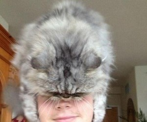 Kocia czapka
