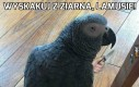 Groźny ptak