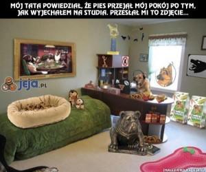 Pies przejął pokój