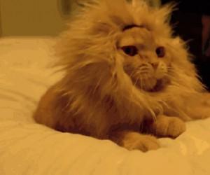 Króleł dżungli