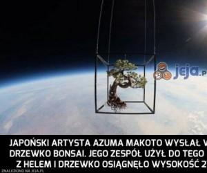 Drzewo w kosmosie
