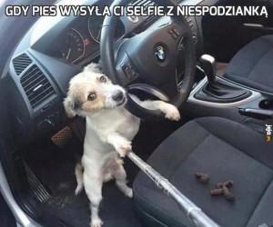Gdy pies wysyła ci selfie z niespodzianką