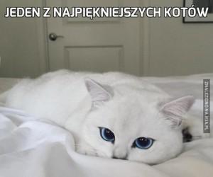 Jeden z najpiękniejszych kotów