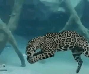 Podwodny jaguar