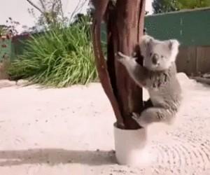 Z drzewa na drzewo
