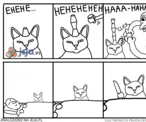 Dlaczego lepiej nie drażnić kota