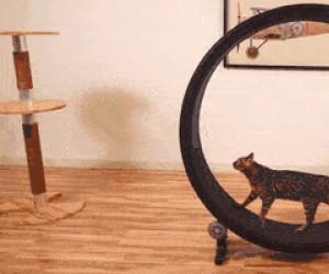 Kółko do biegania dla kota