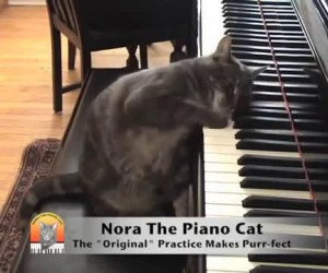 Kto mówił, że koty nie potrafią grać na pianinie?