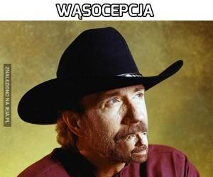 Wąsocepcja
