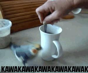 Uzależniona od kawy - Papużka