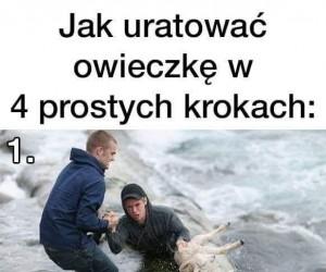Jak uratować owieczkę