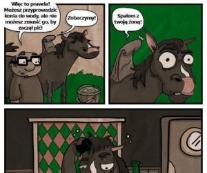 Jak zmusić konia do picia?