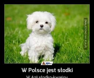 W Polsce jest słodki