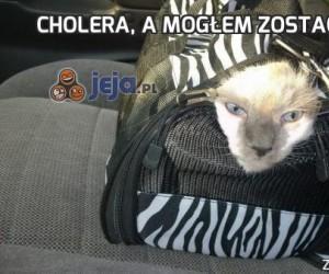 Cholera, a mogłem zostać w domu...