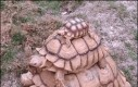 Żółwia wieża