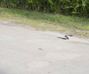 Opętany wężęł