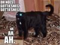 Wyjątkowy koteł