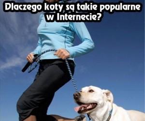 Zagadka popularności kotów w Internecie rozwiązana