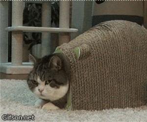 Jak śmiesz wąchać mój tyłek?!