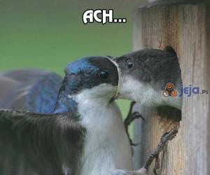 Te pierwsze pocałunki...