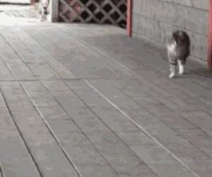 Kot myśli, że jest żołnierzem