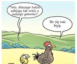 Dlaczego jemy kurczaki?