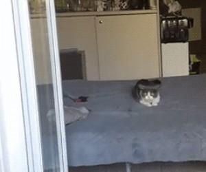 Kot z paranoją