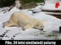 Urodzinowy prezent dla niedźwiedzia