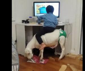 Niektórzy nie mają krzeseł przy biurku...