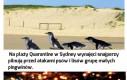 Kolejna garść ciekawostek o Australii i Oceanii