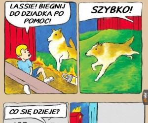 Pomocna psina