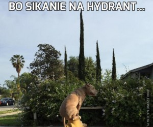 Bo sikanie na hydrant...