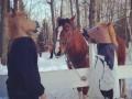 Koń ma już dosyć tych głupich masek
