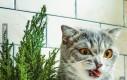 Mój kot nie lubi mojej nowej roślinki