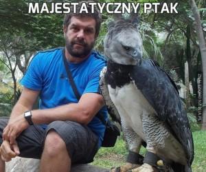 Majestatyczny ptak