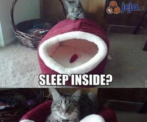 Kot i spanie