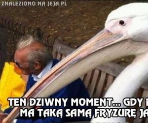 Zawstydzający pelikan