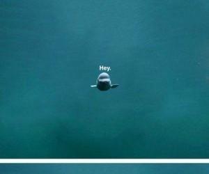 Delfin płynie się przywitać