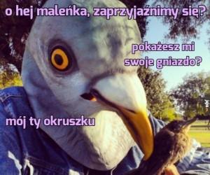 Gołębie zaloty