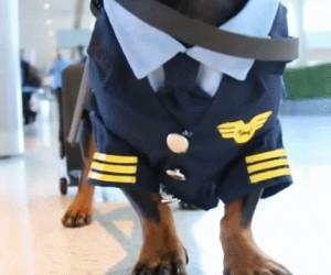 Dzień dobry, będę dziś waszym kapitanem