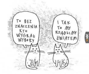 Koty zawsze będą rządzić światem