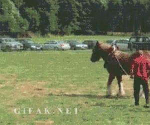 Przeciąganie liny - grupa facetów vs koń