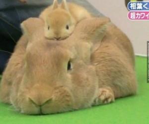 Królik z królikową czapką