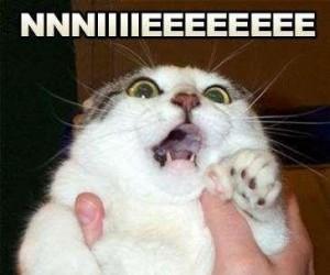 Reakcja kota, gdy chcesz go wykąpać