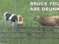 Bruce, znowu piłeś!