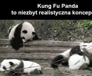 Kung Fu Panda to niezbyt realistyczna koncepcja